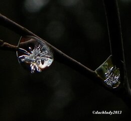 Crystal Droplet