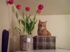 Tip toeing through the tulips!!