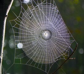 Web in the Woods