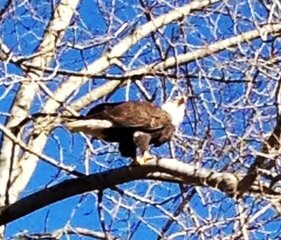 Eagle Waited For Me!