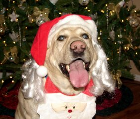 DOGGY WEBSTER CLAUS