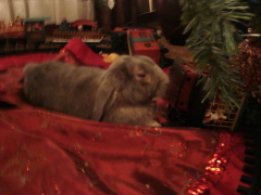 Twas the Night Before Bunny's Christmas