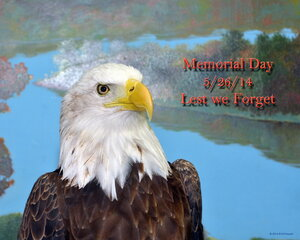 Lest We Forget, Memorial Day.