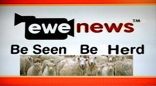 Ewe News - Be seen Be Herd