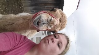 I kissed a Camel and I liked it!