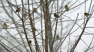 Birds in A Tree during winter storm