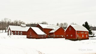 Red Barns in Winter
