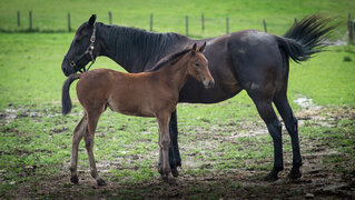 A mare and her young filly