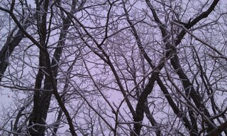 frosted tress