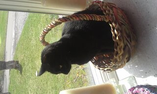 our cat Shadow ready for Easter