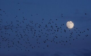 Moon & the Birds