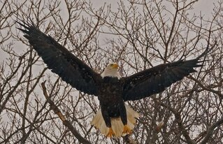 Eagle Today, Best Pose