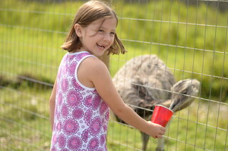 Feeding the Ostrich's the smart way!