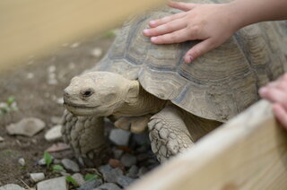 I LOVE this tortoise!