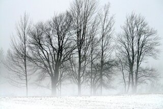 Trees in Fog on Winter Morning