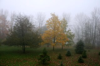 Very foggy in Owego today