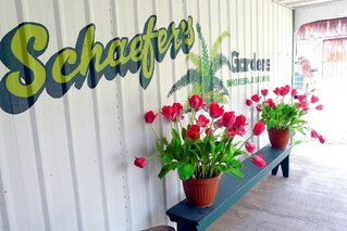 Schaefer's Gardens Spring Open House