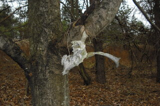 deer skull stuck in tree