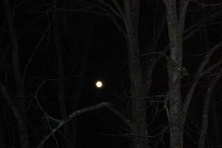 Full Moon in the Trees