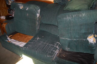 15 yr.old ripped and torn couch.