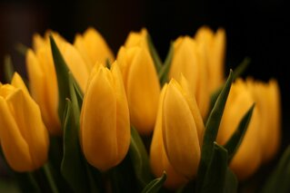 Easter Tulips to brighten your day