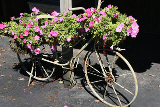Bicycle Plant Stand at Iron Kettle Farm