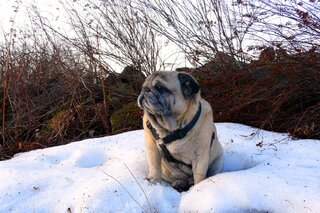Frankie at the last snowdrift