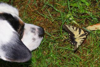 The Puppy & the Butterfly