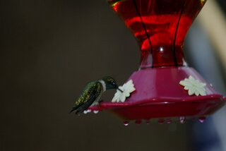 Humming Birds are back