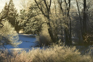 A Very Frosty Morning: