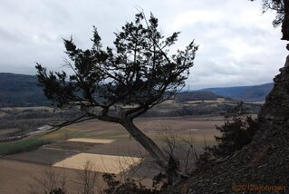 Lone Tree on Vroman's Nose.