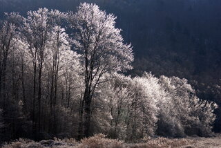 Beautiful Frost
