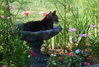 bird bath is cool on a hot day
