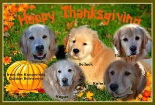 Happy Thanksgiving!!  Konawinds Goldens~