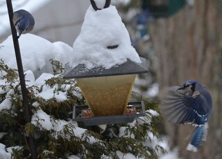 Birds in the snow storm Feb 5 2014