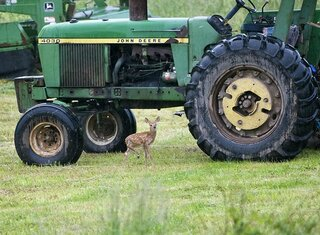 A deer and a Deere