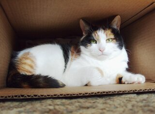Patches in the Box