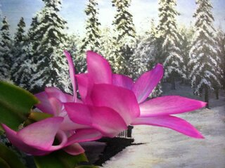 Beautiful Christmas Cactus Blossom