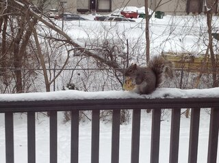 Squirrel in my balcony