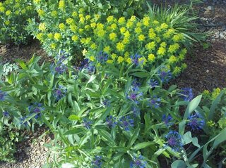 Companion Planting at it's best