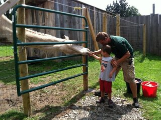 Josh feeding max the camel