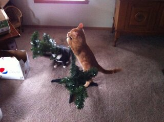 No! Not the tree!!!