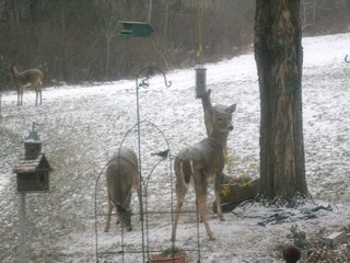 Oh deer, this food is for the birds.