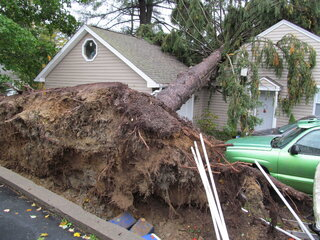Tree lands on Home in Sidney