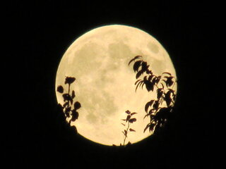 SUPER MOON AUG10th