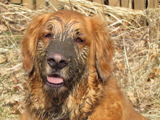 Beautiful Spring Weather Brings Mud
