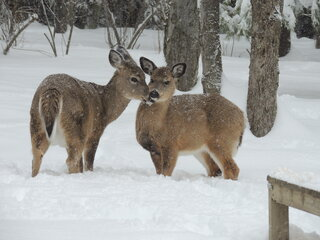 Wildlife has it hard in the deep snow.