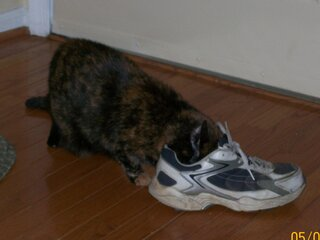 If the shoe fits, sniff it!