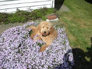 Chloe in the flowers