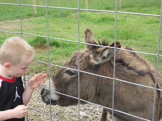 feeding Mr. Donkey was fun